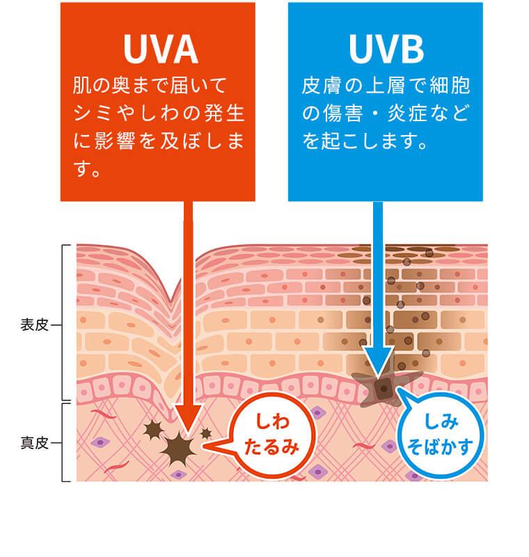 [UVA]肌の奥まで届いて シミやしわの発生に影響を及ぼします。→「しわ たるみ」[UVB]皮膚の上層で細胞の傷害・炎症などを起こします。→「しみ そばかす」