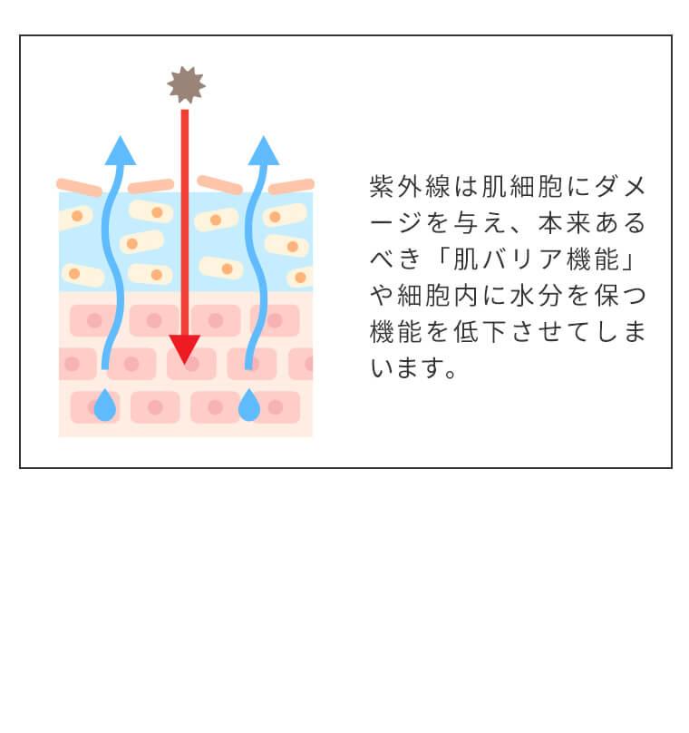 紫外線は肌細胞にダメージを与え、本来あるべき「肌バリア機能」や細胞内に水分を保つ機能を低下させてしまいます。